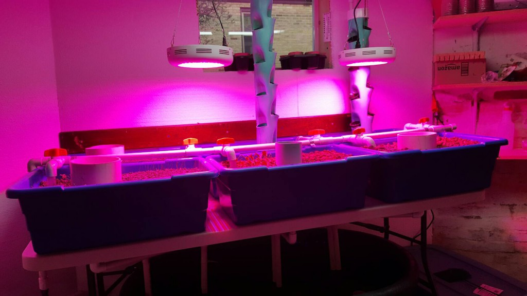 Jim's plants with lights